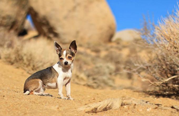 Fritz. Desert dog. Bishop, CA.
